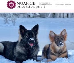 Site web de chiens